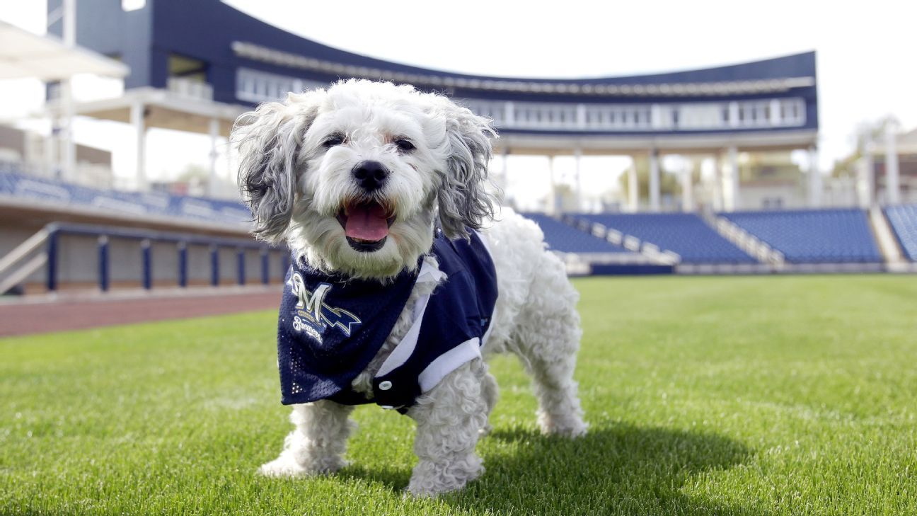 Milwaukee Brewers say canine mascot 'Hank' was not swapped