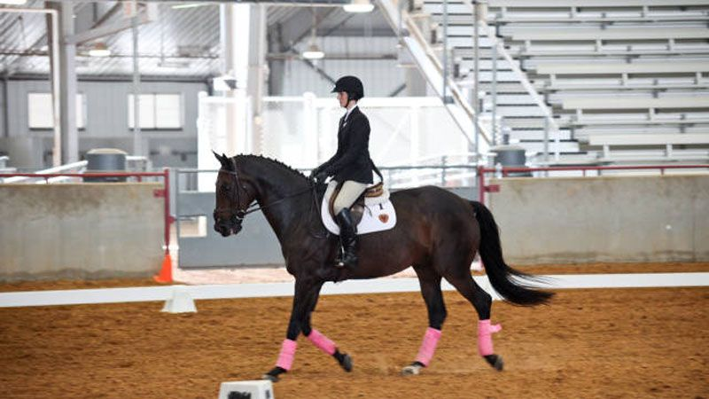 Texas A Amp M Equestrian Team Wins First Meet Of The Season