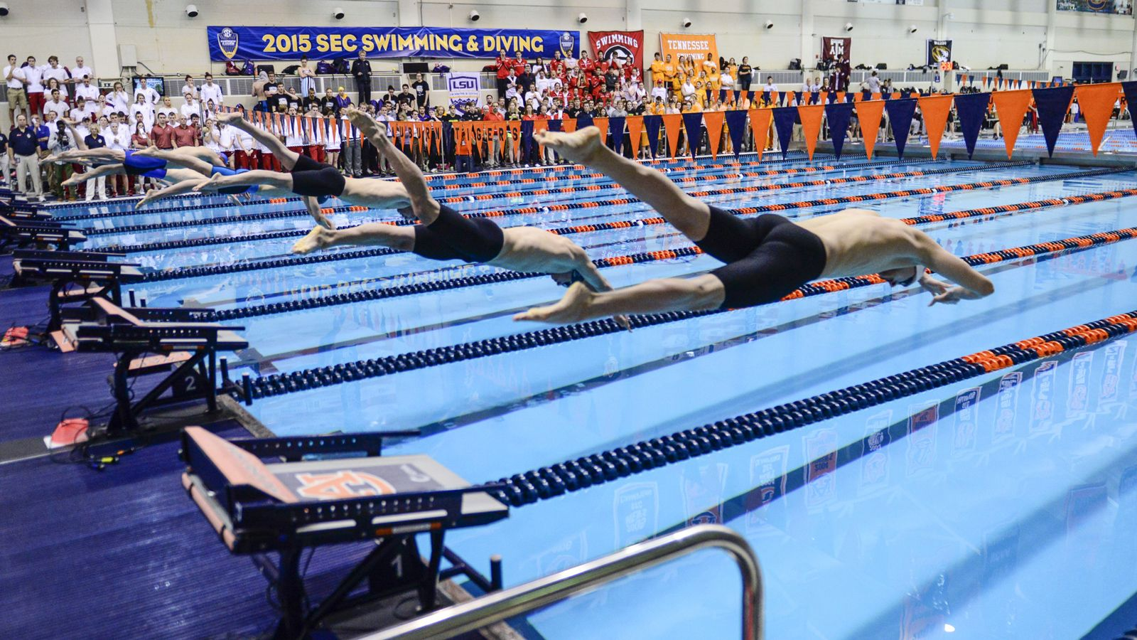 SEC swimmers & divers qualify for NCAA Championship
