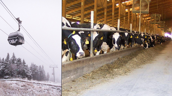 This winter Killington's K-1 gondola will run on cow power.