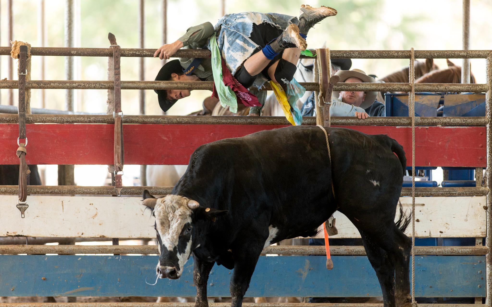 Bull Fighter Training at Sankey Rodeo School