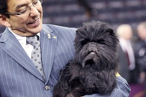 Banana Joe became the first affenpinscher to win at the country's premier dog show.
