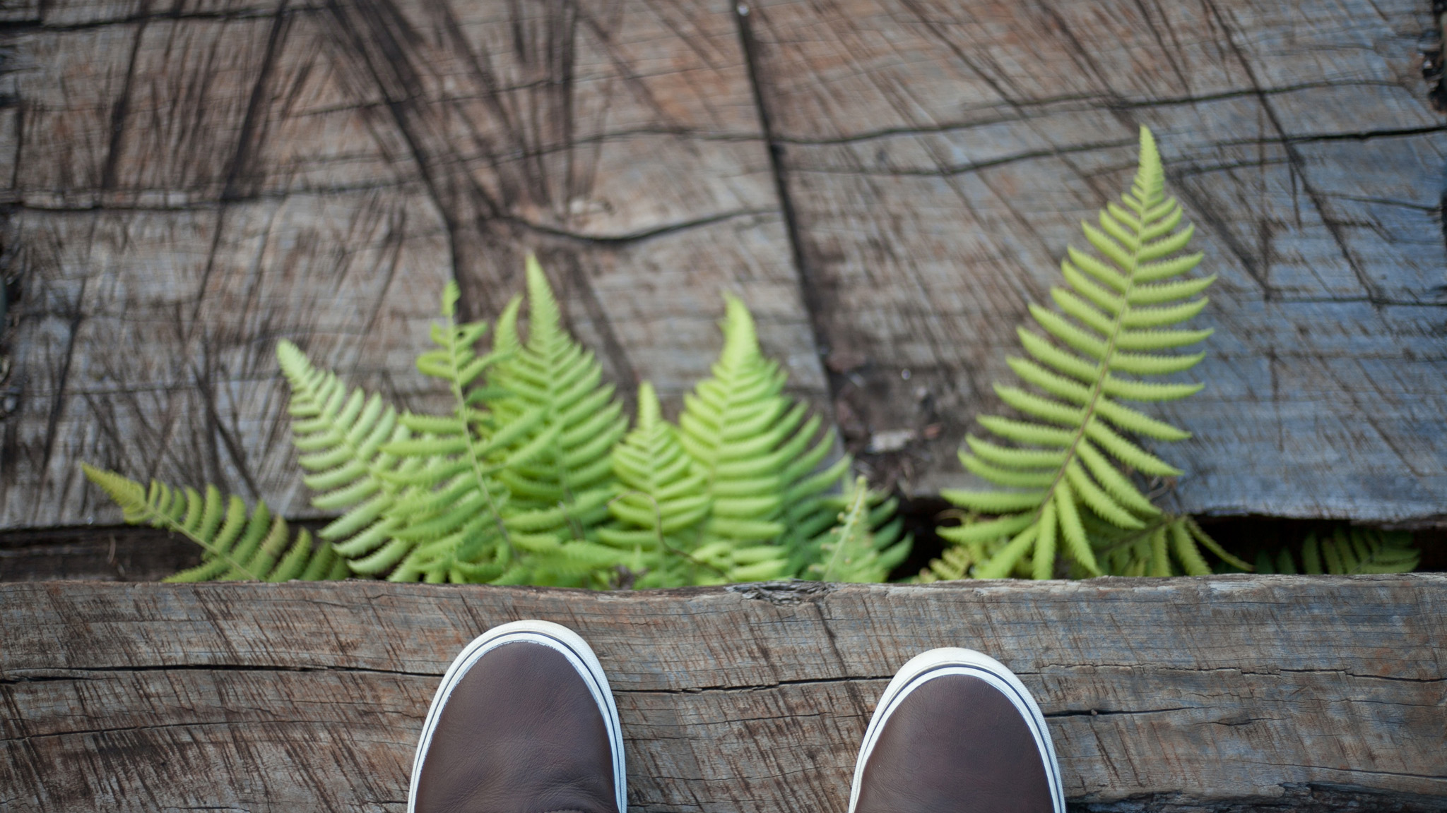 Fern'ed footsteps