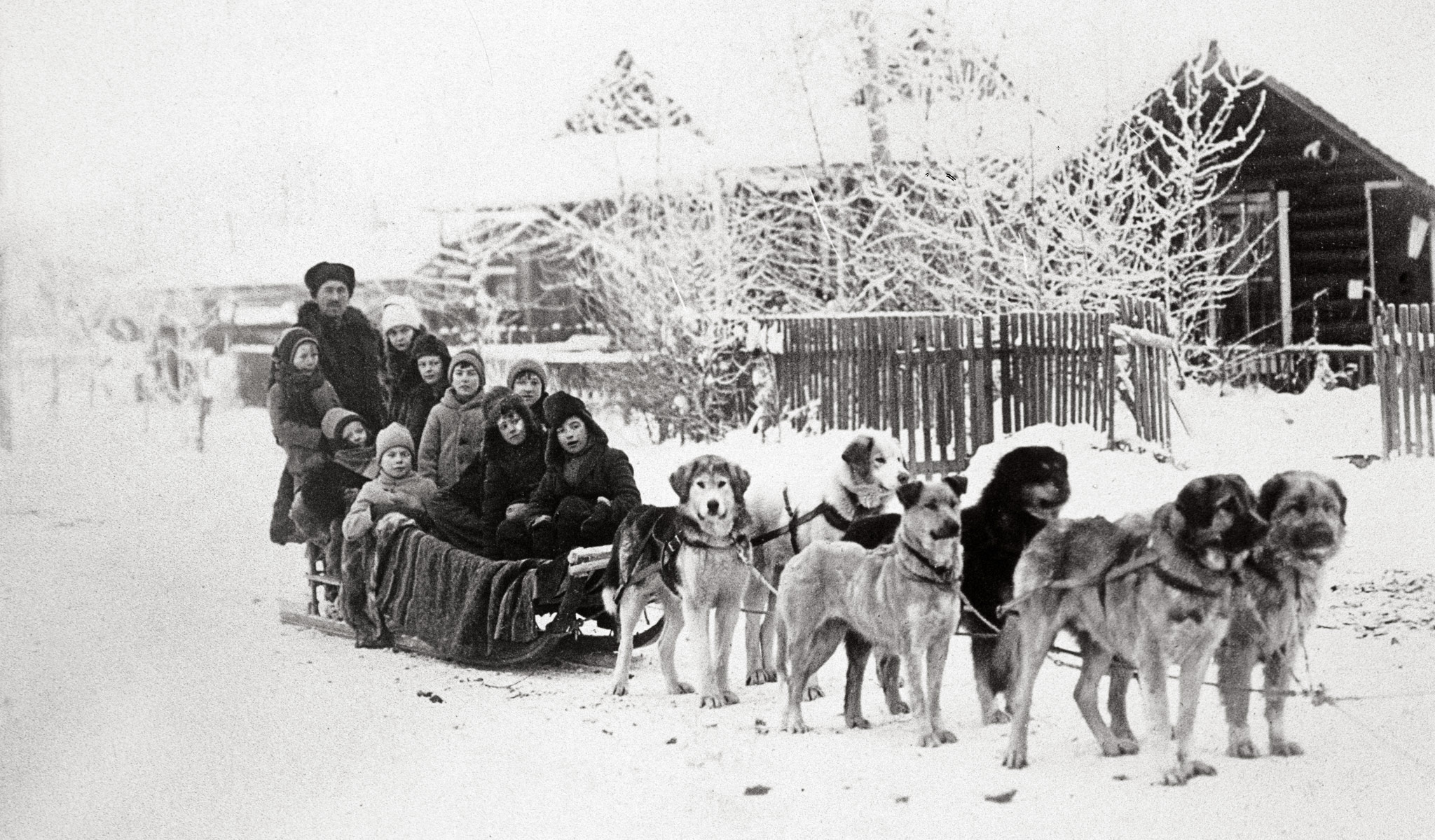 Yukon gold rush sled dogs quotes for Alaskan cuisine history