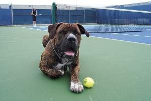 Bethanie Mattek-Sands and her husband, Justin Sands, arent a complete family without their dog, Ruger.