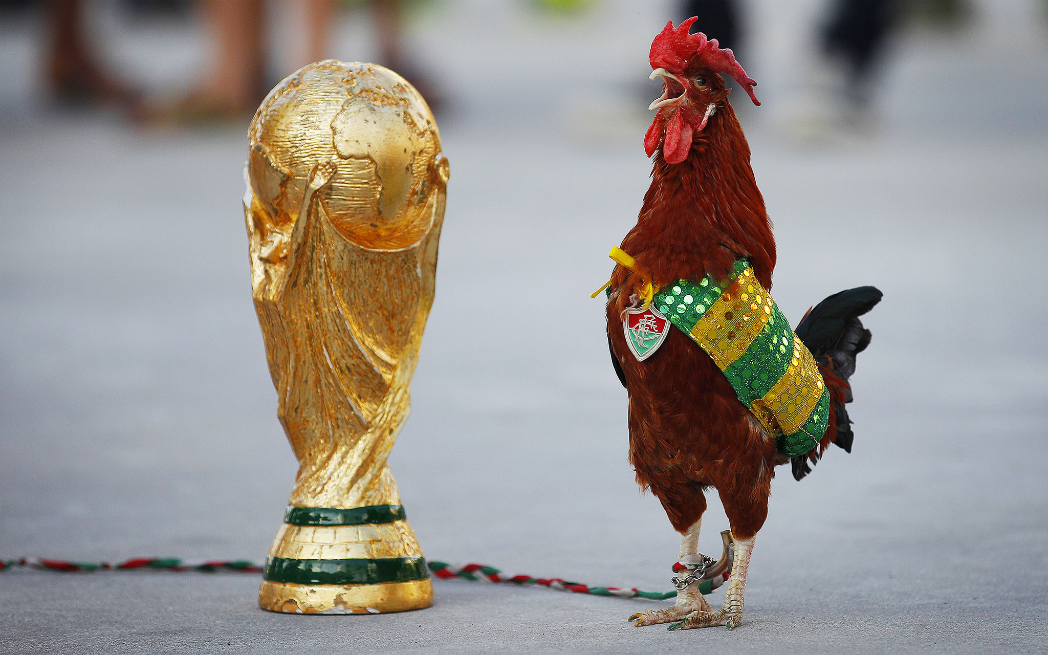 WC Rooster