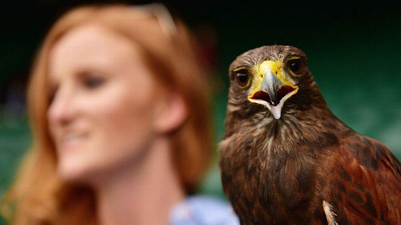 Rufus the Harris Hawk and Imogen Davis