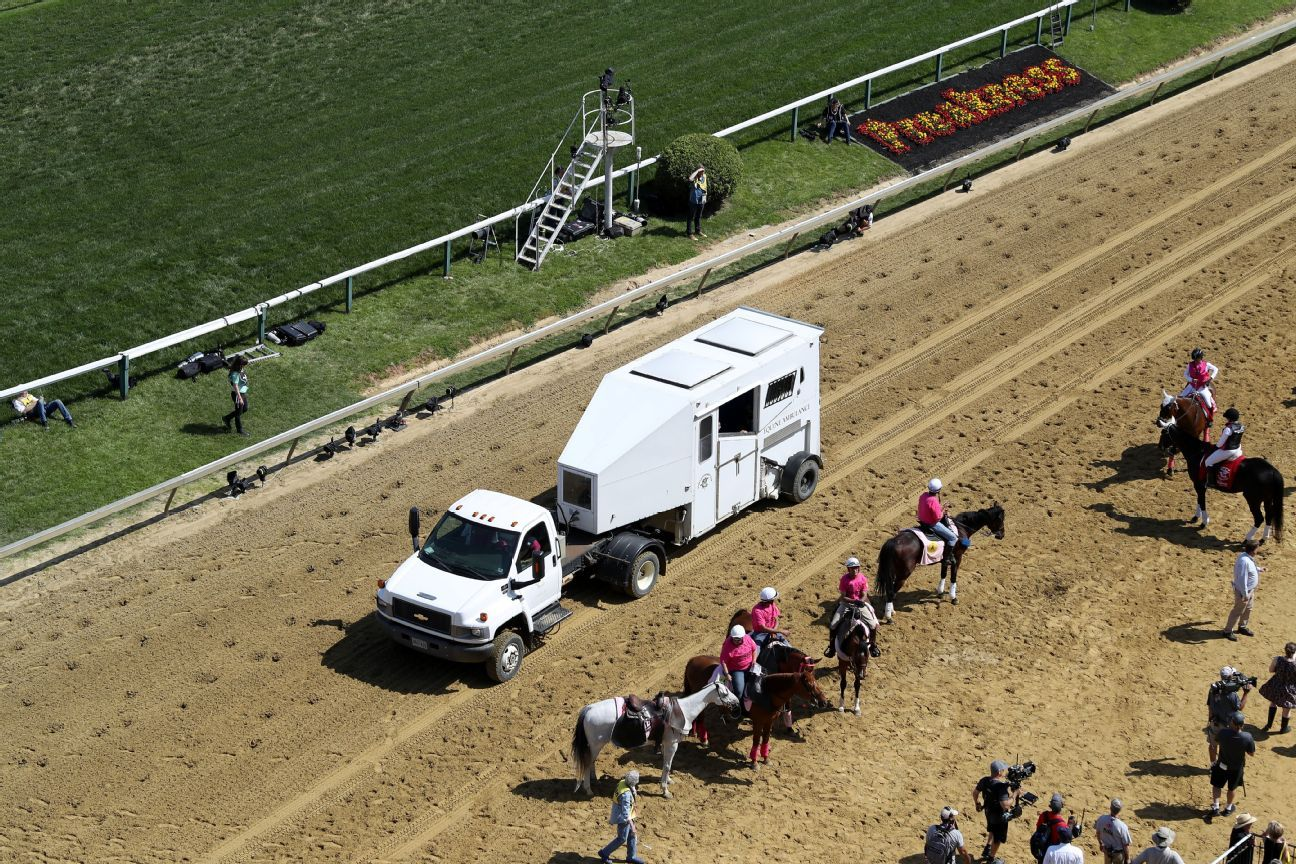 Filly Dies On Pimlico Track Day Before Preakness